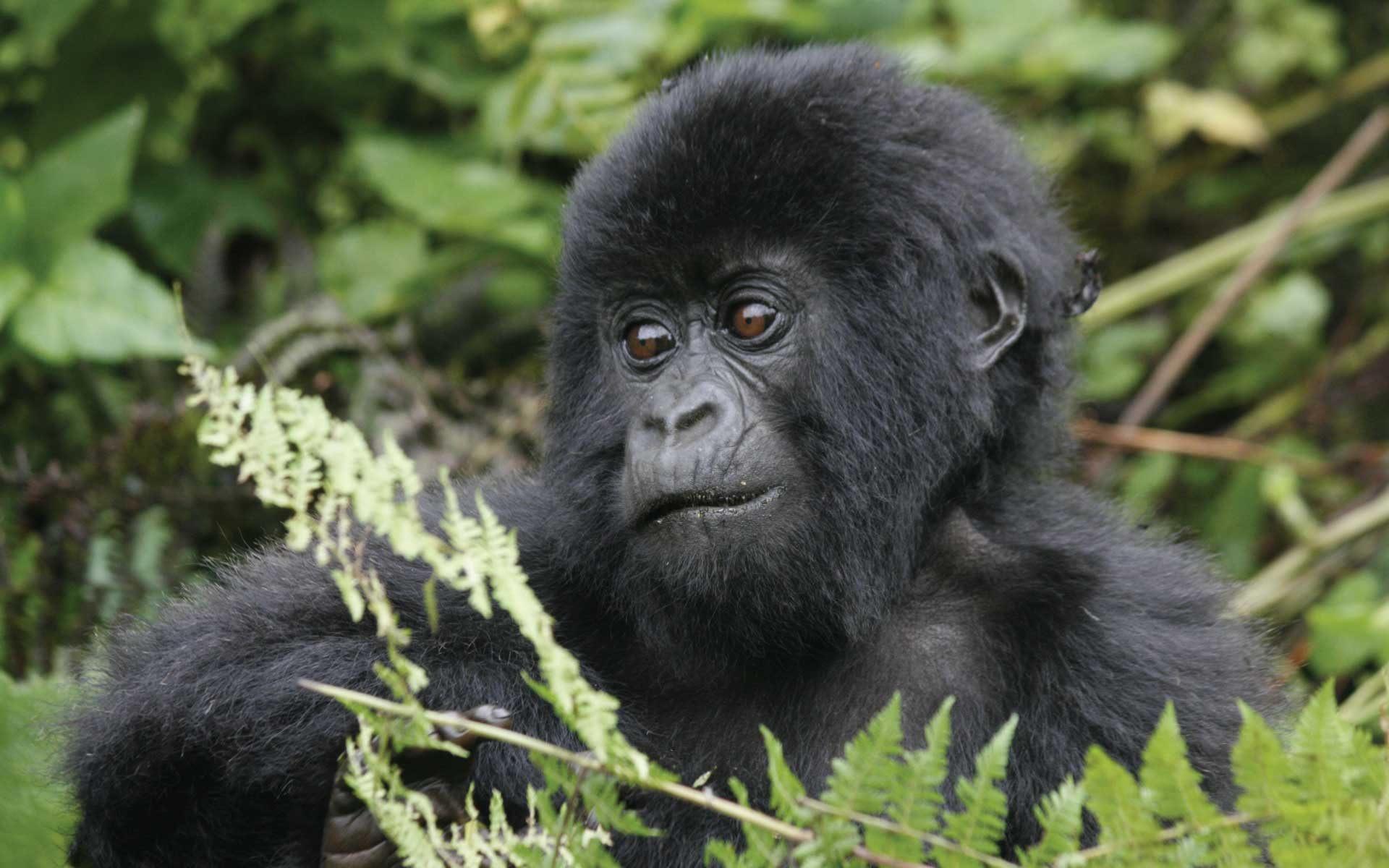 Gorilla Tracking & Wildlife Tour