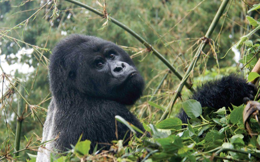 Rwanda Gorilla Trekking & Wildlife Safari