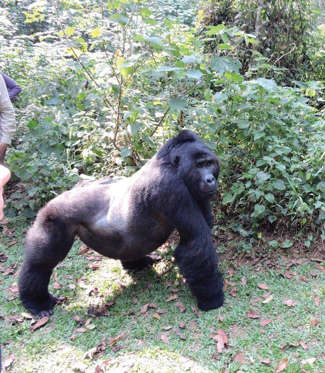 5 Day Gorilla Tracking & Wildlife Tour