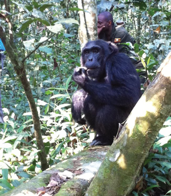 7 Days Uganda Primates Tour Safari