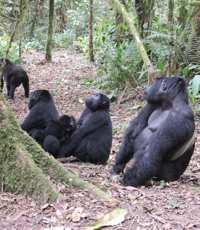 Rwanda Gorillas& Cultural Tour