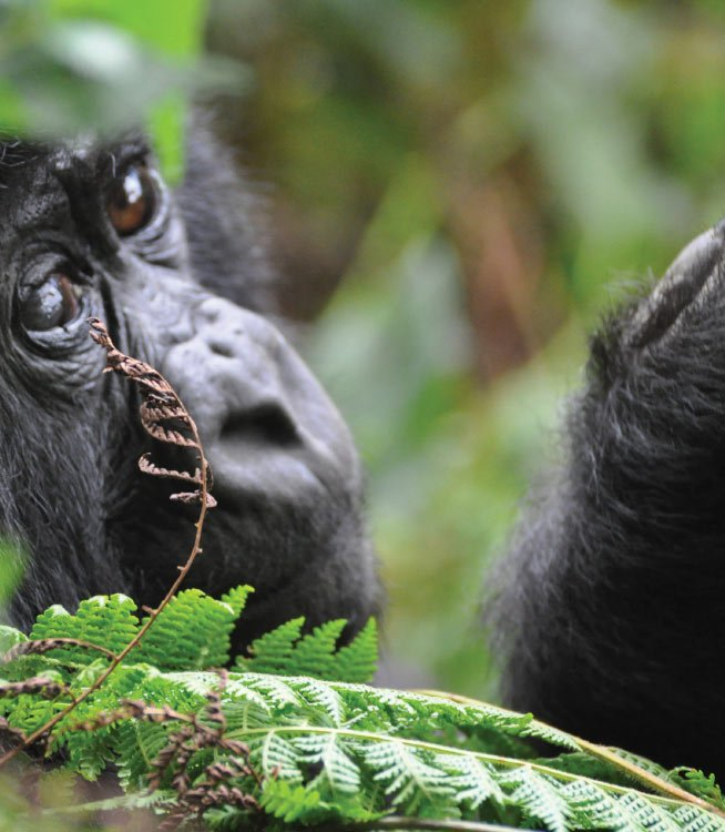 9 Day Classic Rwanda Safari