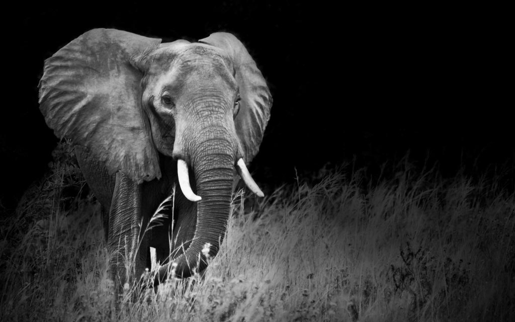Rwanda Uganda Gorilla & Wildlife Safari