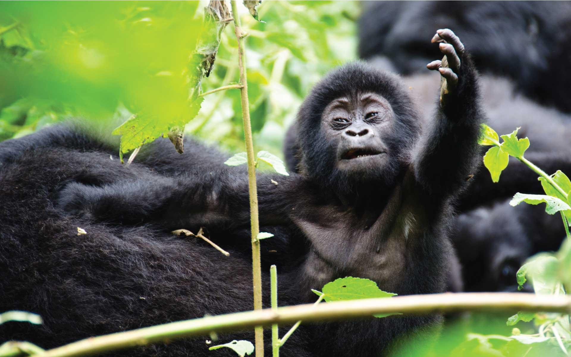 Ultimate Uganda & Rwanda