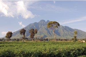 Virunga Mountain Ranges