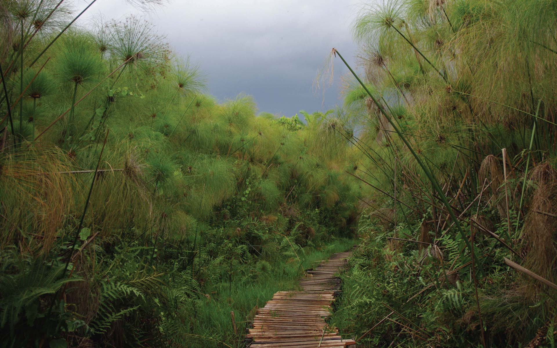 BIGODI WETLAND SANCTUARY, Uganda