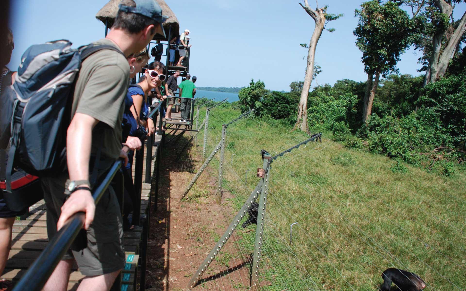 Entebbe Ngamba Chimp Island