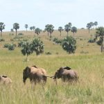 11 Days Uganda Highlights Safari